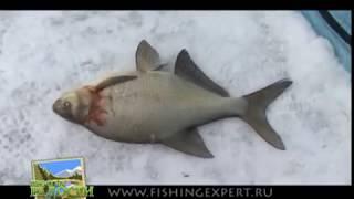 Ловля огромных лещей 2 кг. зима 2011г. Еланчик
