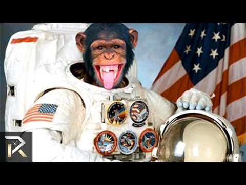 10 Craziest Things We Launched Into Space