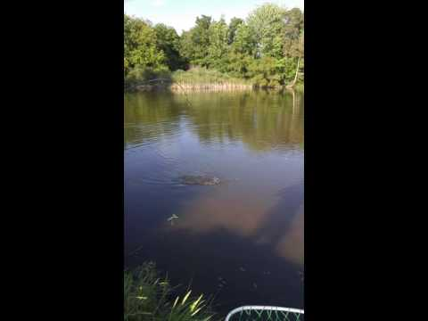 Pike fishing! Woodstock Ontario pittock lake