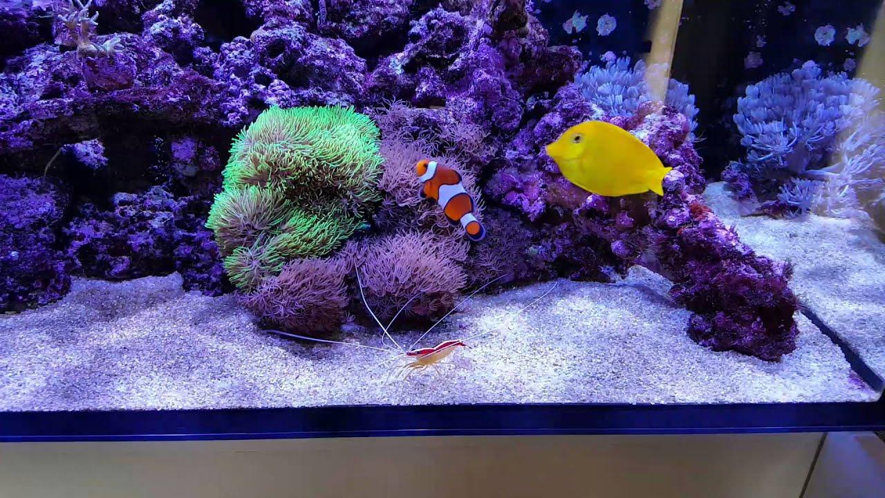 Freshwater fish tank alkalinity - Salinity Alkalinity Changes
