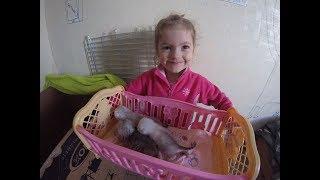 😻КОТЯТАМ 2 НЕДЕЛИ - ВЗВЕШИВАЕМ / КОШКА-МАМА В ШОКЕ 🐱 МЯУКАНЬЕ КОТЯТ  Kittens Cat КОТЫ И ДЕТИ