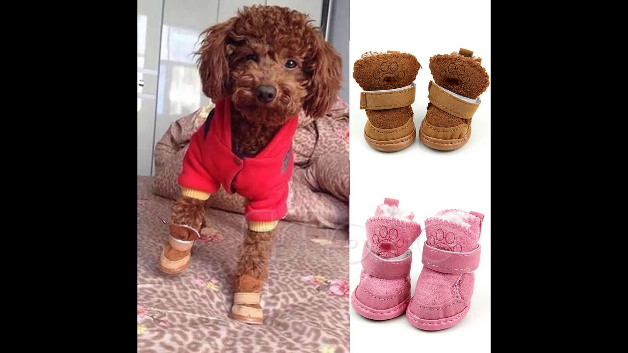 Fancy Small Dog Clothes