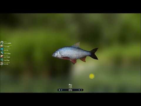 Язь, прохождение квеста в игре, Трофейная рыбалка 2