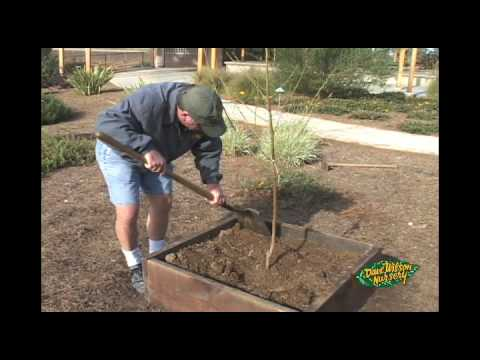 Elevate Your Fruit Tree Planting YouTube