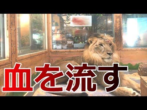 【炎上】動物の管理がひどい?めっちゃ触れる動物園に行ってみたら衝撃の新事実【ピエリ守山】