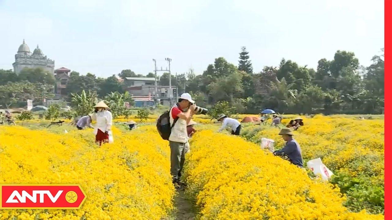 Nghề trồng hoa Cúc Chi | Mỗi Ngày Một Nghề | ANTV