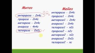 Задача части С ЕГЭ Биология   2017. Митоз. Мейоз
