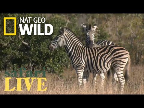Safari Live - Day 10 | Nat Geo WILD