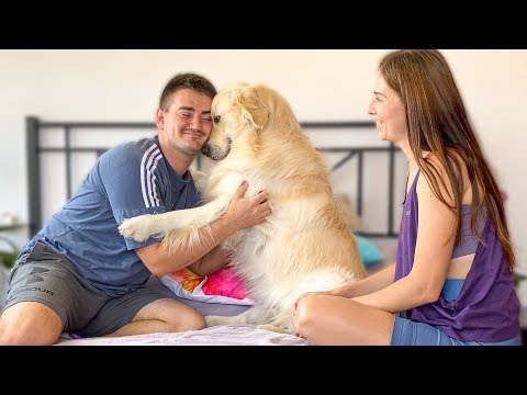 Сute Golden Retriever thinks He is our Baby