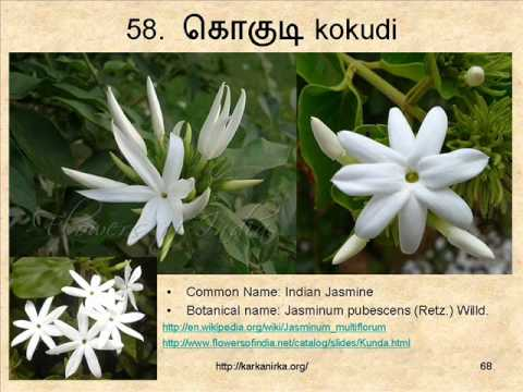flowers names in tamil and english  flowers, Natural flower