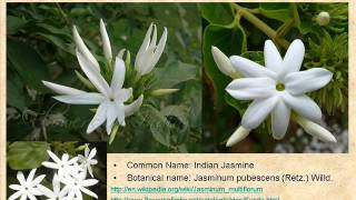 FLOWERS NAMES IN TAMIL AND ENGLISH  106 FLOWERS