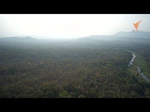 องค์กรสิ่งแวดล้อมค้านใช้ ม. 44 สร้างเขื่อนแม่วงก์ ชี้ขัดนโยบายรักษาป่าของรัฐ