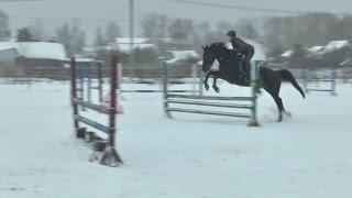 """Программа """"Территория спорта"""": Конный спорт в Рыбинске"""