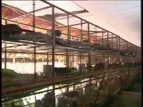Kinh nghiệm chăn nuôi chồn nhung đen trên vtv2 - Liên Hệ: A. Kiên - Mobile: 0912602577