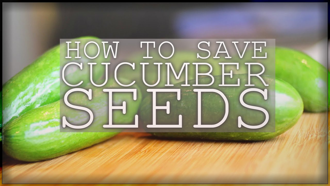 How to save cucumbers