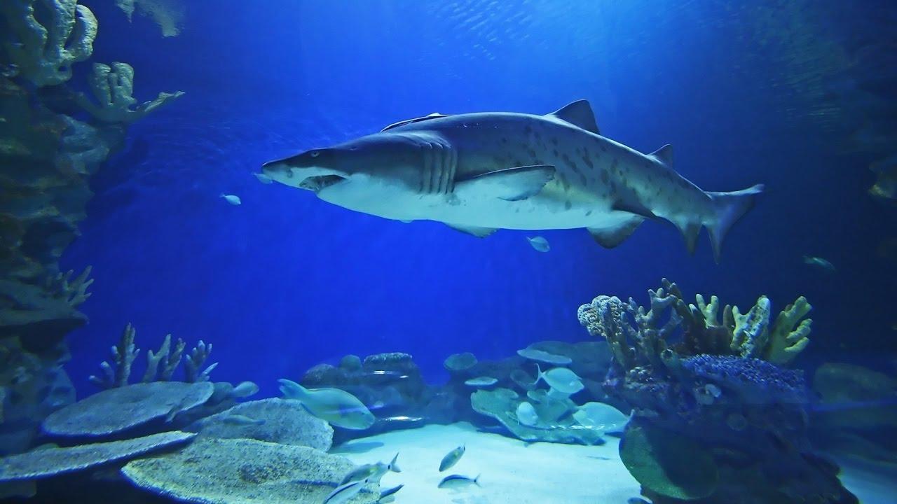 Freshwater aquarium fish in dubai - Aquarium Of The Dubai Mall