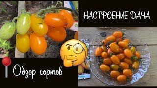 """???? Обзор на помидоры черри ???? """" Финик желтый, красный, оранжевый"""" F1 от Русского огорода"""