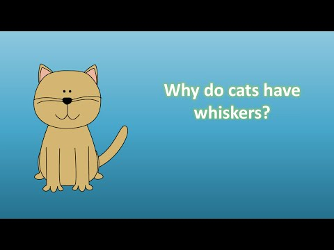 Why Do Cats Have Whiskers ?