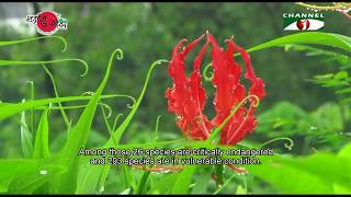 Nature and Life - Episode 257 (Conservation of the Endangered Plants)