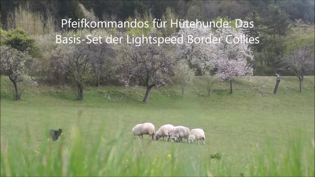 Download Pfeifkommandos für Hütehunde: Das Basisset
