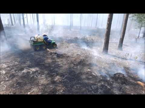 Prescribed Fire: burning 2 stands