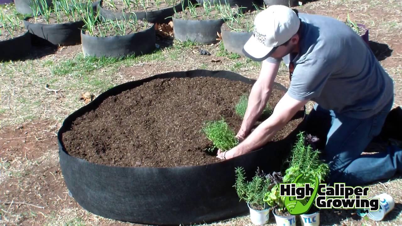 Raised Bed Gardening In Smart Pots