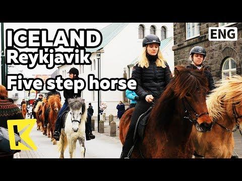 【K】Iceland Travel-Reykjavik[아이슬란드 여행-레이캬비크]다섯가지 걸음걸이를 가진 말/Five step/Horse/Native/Pony
