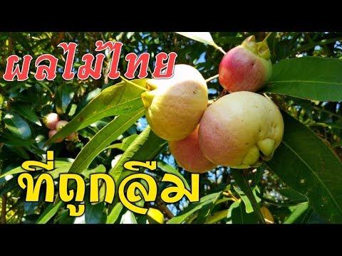 ผลไม้ไทยที่ถูกลืม คุณรู้จักชื่อแน่นอน ไปดูกันมันชื่ออะไร? l Pai91.5