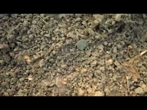 Metal Detecting  Romanian Forest Digging   january 2015
