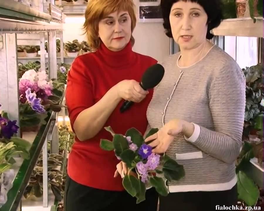 26 июн 2017. Интернет-магазин фиалок ольги дудиной. Добро пожаловать в. В моем магазине вы обязательно найдете цветок, который придется вам по душе. Спешите купить замечательные узамбарские фиалки, пока стоит теплая и, что самое главное, удачная для отправки посылок погода!. ☀.