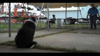 Knox County 4h Dog Show - Knox County Fair