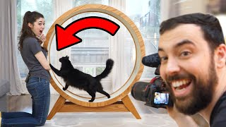 Download Making a Giant Hamster Wheel for our Cat Mp3 and Videos