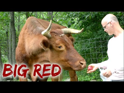 Big Red's House! - Gary Yourofsky visits the Garden of Vegan