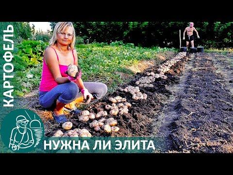 🌿 Урожай после