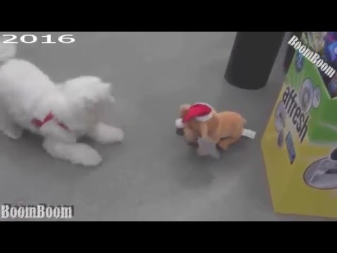 Funny Videos  We Wish You A Merry Christmas  Funny Cats And Dogs Videos  MerryChristmas 2016 HQ