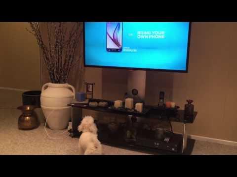 Barking at cartoon dog