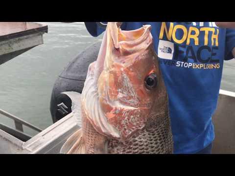 Daintree River Fishing Trip