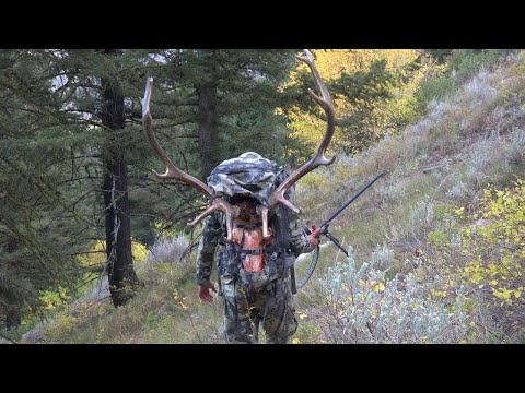 OTC Idaho Elk And Bear Hunt [4K]- It Is Perpetual