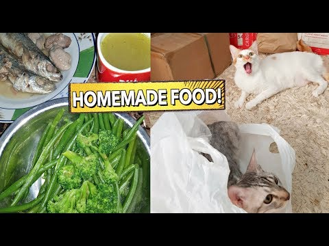 DIY HOMEMADE Healthy CAT FOOD | Will They Love it or NOT?