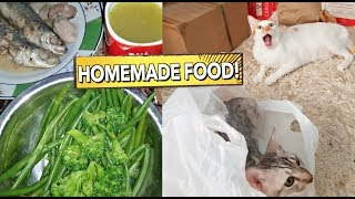 DIY HOMEMADE Healthy CAT FOOD | Will They Love it or NOT? 🤔