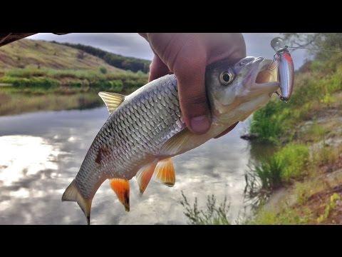 рыбалка для начинающих на хопре
