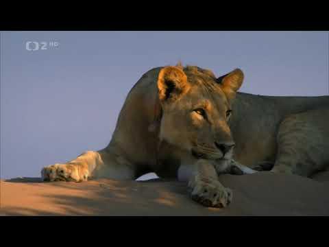 Download Lvi z Namibijské pouště-Dokument