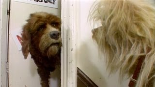 The Organization Of Muppet Dogs - Jim's Red Book - The Jim Henson Company
