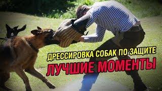 Дрессировка собак по защите - Лучшие моменты | Slow Motion
