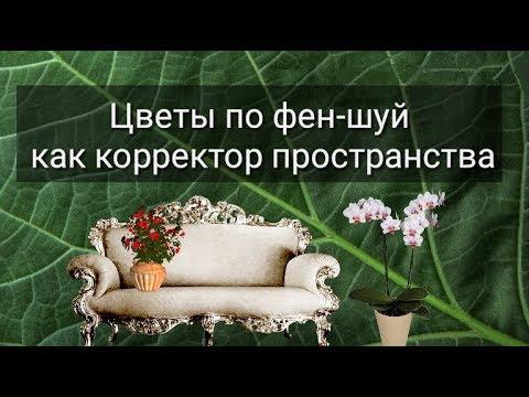 ЦВЕТЫ ПО ФЕН-ШУЙ КАК КОРРЕКТОР ПРОСТРАНСТВА