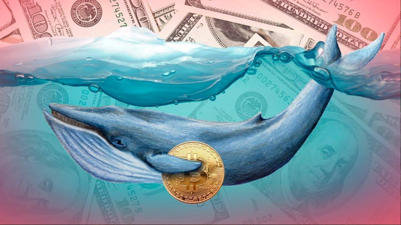 микрозайм онлайн синий кит