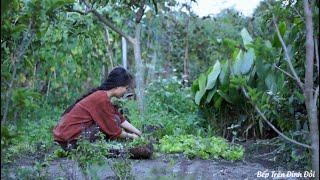 Làm Giá Đỗ Bằng Cát Suối Và Món Bánh Từ Nhiều Loại Rau | Vietnamese Crepe