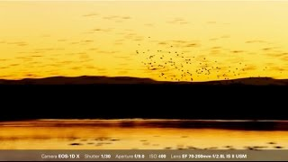 Canon: Bird Photography with Arthur Morris: Sunrise and Sunset Blurs and Silhouettes