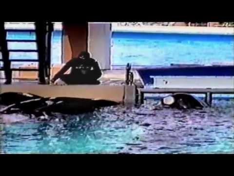 Blackfish - Orkid