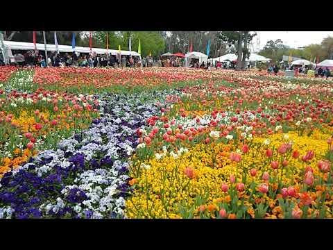 Florida Flower Festival In Canberra